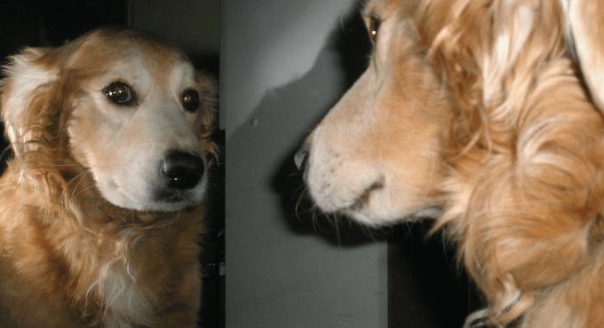 Self-Awareness - Safety's Best Friend